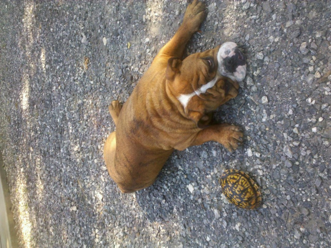 Just me and my turtle