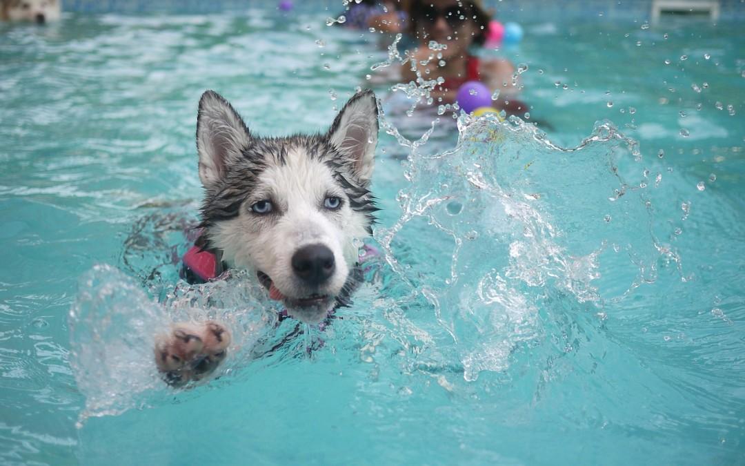 'Hot Dog'- Keeping Fido Summertime Safe