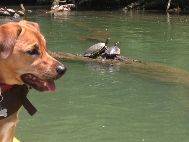 Even the turtles agree it's gorgeous outside