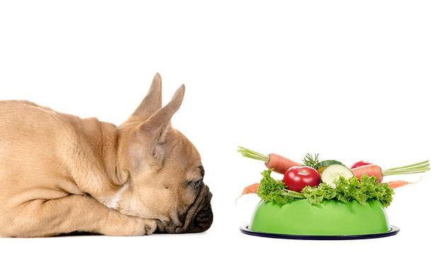 Feeding Frenzy -A Dog Owner's Dilemma