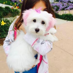 Puppy-licious!