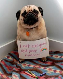 dog-shaming-poop-rainbows