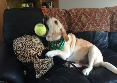 Dog-cation time! Let's not forget my BALL