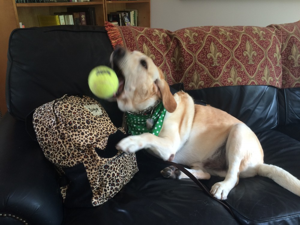 Dog-cation time!  Let's not forget my BALL!