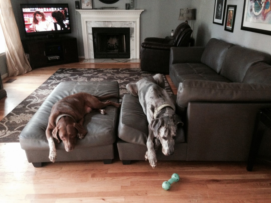 We're glad you bought this couch for us. We were tired of laying on the floor