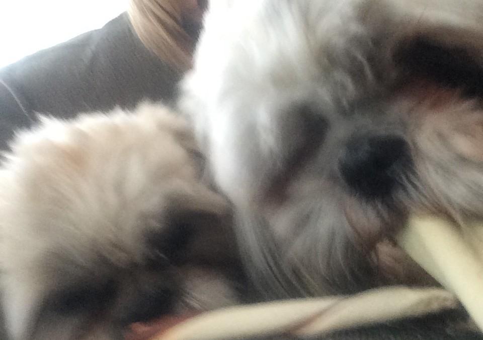 Photo bombing a pet selfie