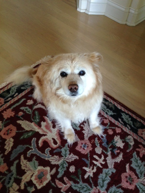Sophie… she's our senior gal