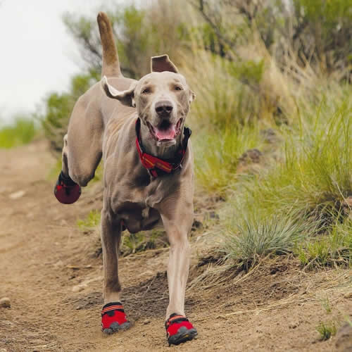 Paws to Run -Advice for Running with Dogs
